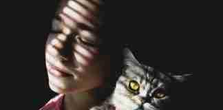 istoria pisicii